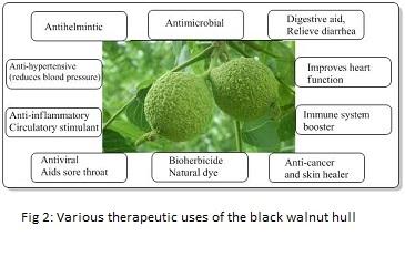Therapeutic-Uses-of-Black-Walnut-Hull