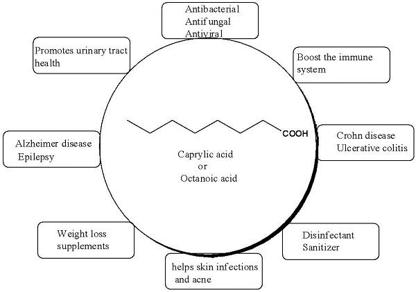 Caprylic-acid-Benefits