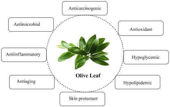 Olive-Leaf-Health-Benefits