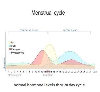 Graph-of-Estrogen-Cycle
